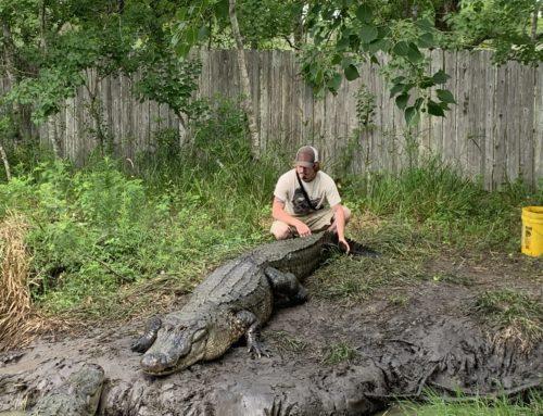 A Trip to Crocodile Encounter